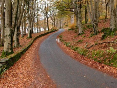 06_autumnlanes-49-600-450-80